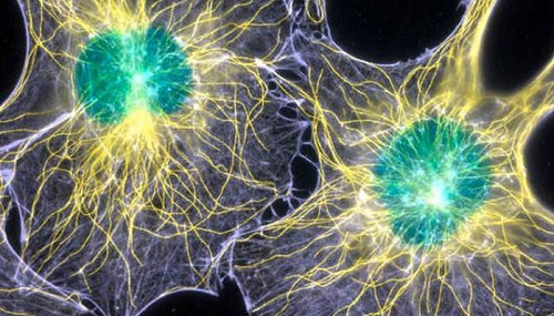 Scientists Discover Biophotons In The Brain That Could Hint Our Consciousness is Directly Linked to Light!